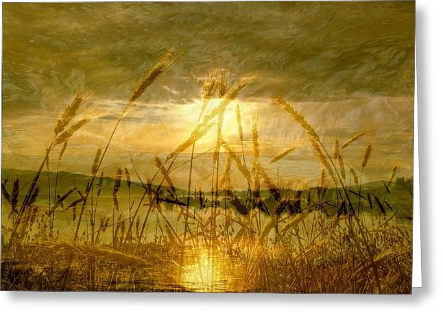 West Fork Greeting Cards - Golden Sunset Greeting Card by Barbara St Jean