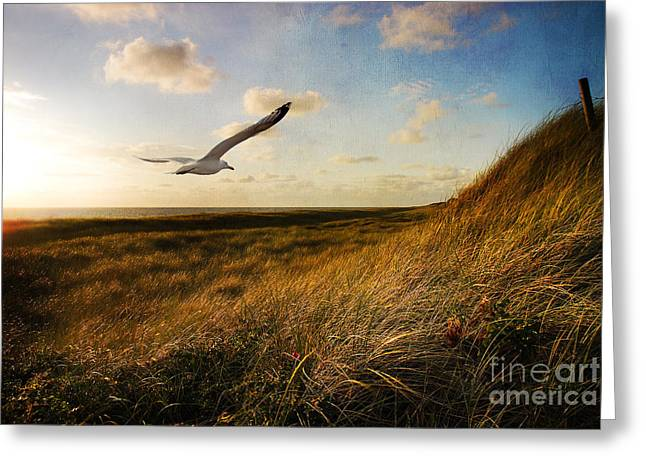 Hannes Cmarits Greeting Cards - Above Golden Dunes Greeting Card by Hannes Cmarits