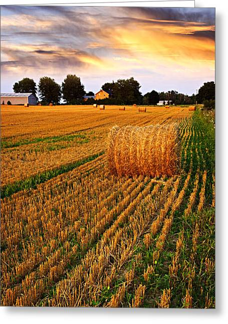 Prairies Greeting Cards - Golden sunset over farm field with hay bales Greeting Card by Elena Elisseeva