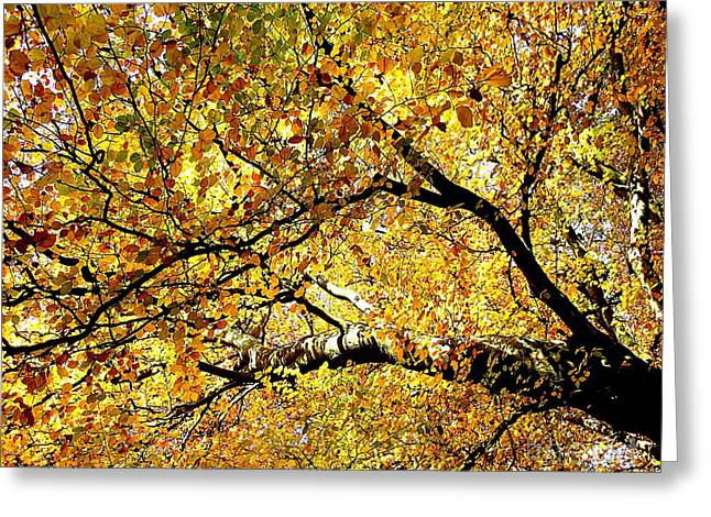 Abstract Expressionism Photographs Greeting Cards - Golden Sunshine Greeting Card by Patrick J Murphy