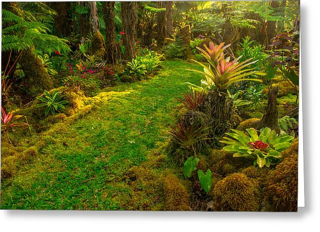 Bromeliad Greeting Cards - Golden time in Bobbies garden  Greeting Card by Kim Kornbacher