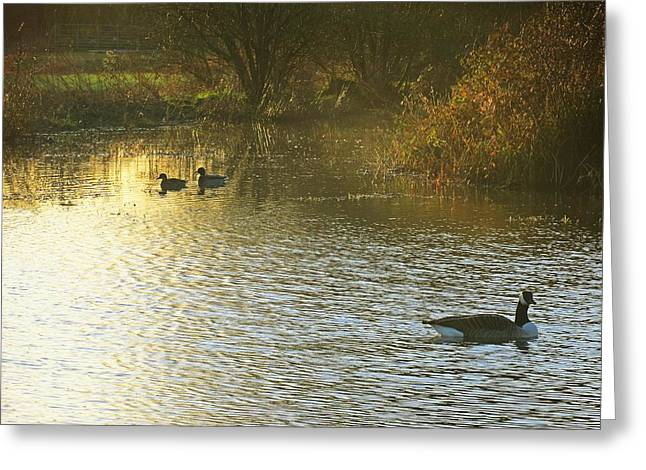 Landscape Greeting Cards - Golden Time Of Day Greeting Card by Johnny Wills