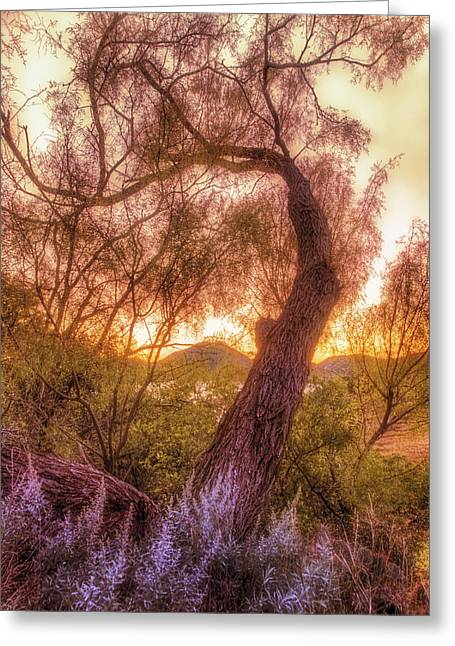 Jmpolitte Greeting Cards - Golden Tree at the Quartz Mountains - Oklahoma Greeting Card by Jason Politte