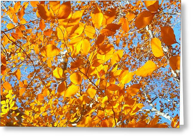 For Those Who Love Blue Greeting Cards - Golden Tree B Greeting Card by Sylvia Herrington