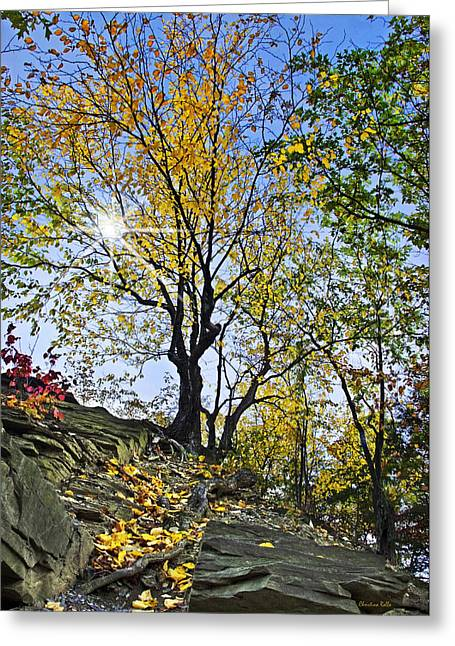 Buttermilk Falls Greeting Cards - Golden Tree Greeting Card by Christina Rollo