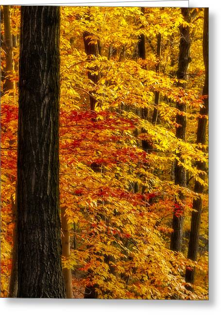Botany Greeting Cards - Golden Trees Glowing Greeting Card by Susan Candelario