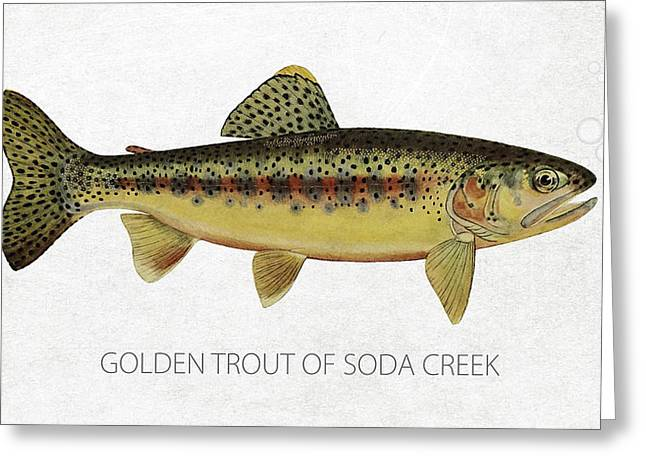Fishing Creek Greeting Cards - Golden Trout of Soda Creek Greeting Card by Aged Pixel