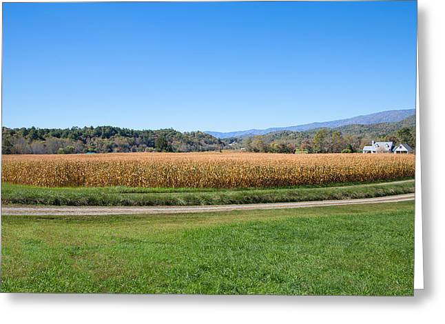 Scenic Drive Greeting Cards - Golden Valley Greeting Card by John Bailey