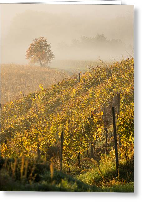 Haze Greeting Cards - Golden vineyard and tree Greeting Card by Davorin Mance