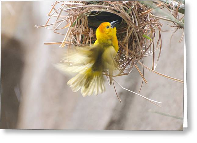 Cheryl Cencich Greeting Cards - Golden Weaver Greeting Card by Cheryl Cencich