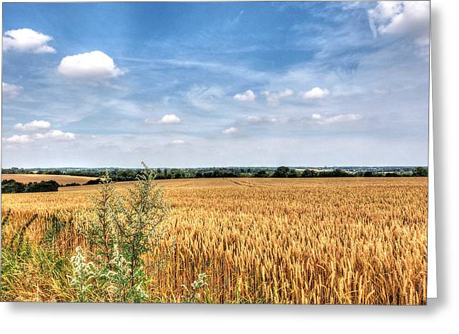 Harvest Time Greeting Cards - Golden Wheat Fields Greeting Card by Gill Billington
