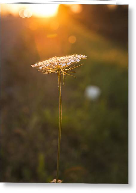 Sunset Prints Pyrography Greeting Cards - Golden Wildflower Sunset  Greeting Card by Jason  Choy