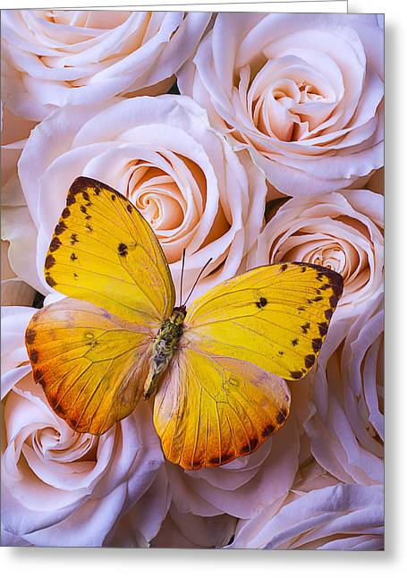 Gorgeous Flowers Greeting Cards - Golden Wings On Roses Greeting Card by Garry Gay