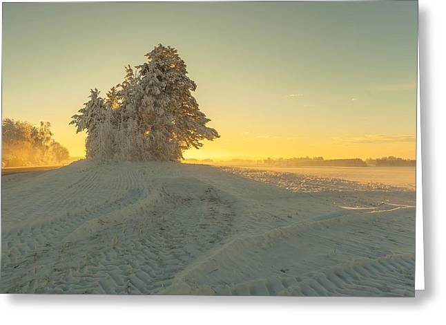 Sunset In Norway Greeting Cards - Golden Winter Greeting Card by Rose-Maries Pictures