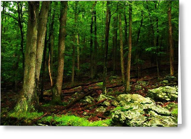 Photorealism Greeting Cards - Golden Woods Greeting Card by David Glotfelty