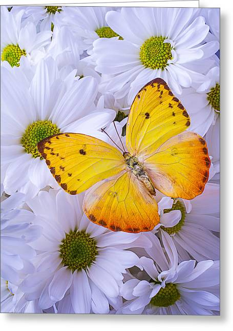 Gorgeous Flowers Greeting Cards - Golden Yellow Butterfly Greeting Card by Garry Gay