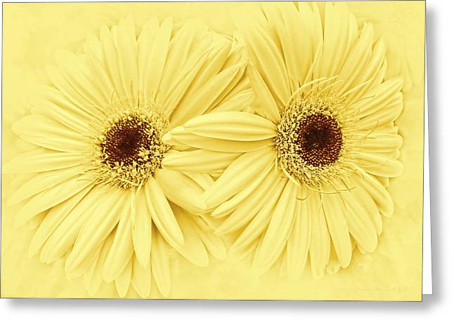 Golden Brown Greeting Cards - Golden Yellow Gerber Daisy Flowers Greeting Card by Jennie Marie Schell