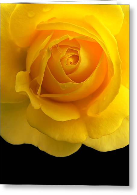 Rose Portrait Greeting Cards - Golden Yellow Rose and Black Greeting Card by Jennie Marie Schell