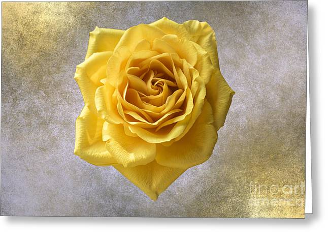 Les Fleurs Greeting Cards - Golden Yellow Rose Greeting Card by Linda Troski