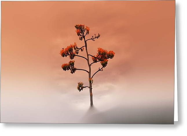Floral Digital Art Digital Art Greeting Cards - Goldenflower Glory Clouds Greeting Card by Beverly Guilliams