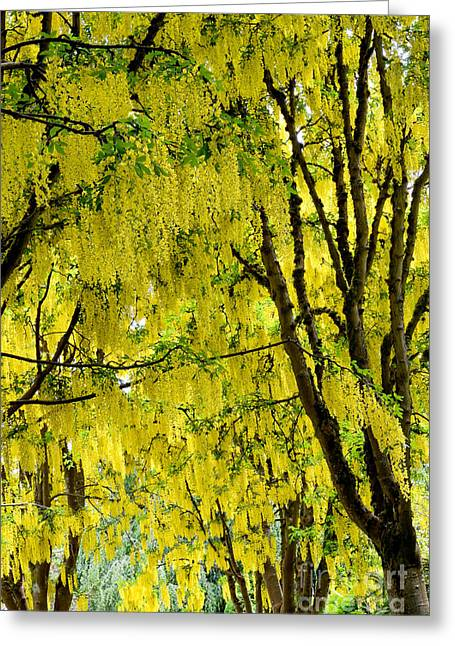 Golden Chain Greeting Cards - Golden Chain Tree Greeting Card by Terry Elniski