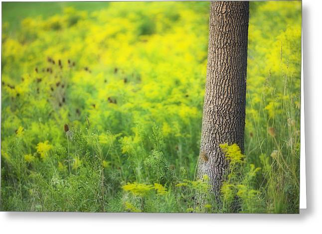 Descriptors Greeting Cards - Goldenrod - Binbrook Conservation Area Greeting Card by Darwin Wiggett