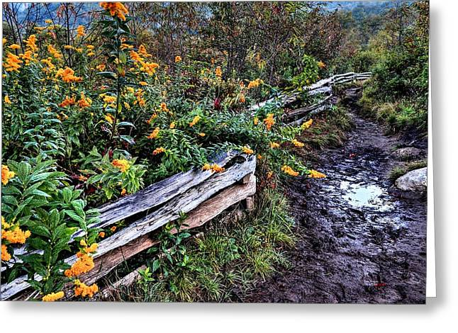 Mud Season Greeting Cards - Goldenrod blooms on the Blue Ridge Parkway  Greeting Card by Carol R Montoya