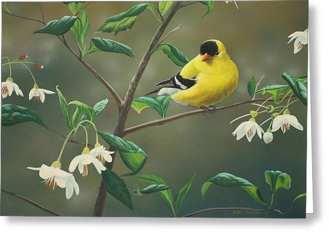 Birds Greeting Cards - Goldfinch and Snowbells Greeting Card by Peter Mathios