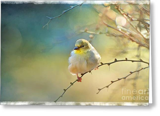 Goldfinch Digital Art Greeting Cards - Goldfinch in morning light - Digital Paint I  Greeting Card by Debbie Portwood