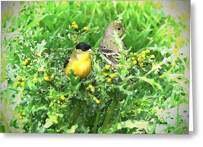 Colusa Greeting Cards - Goldfinch Mated Pair Greeting Card by Pamela Patch