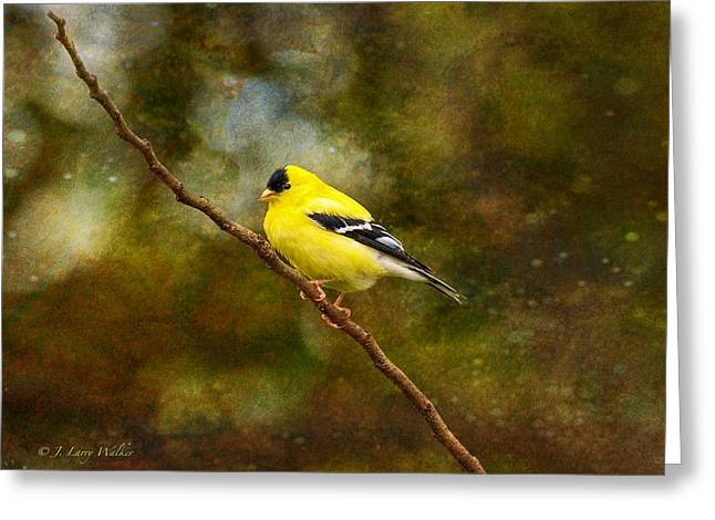 Goldfinch Digital Art Greeting Cards - Goldfinch On A Limb Greeting Card by J Larry Walker