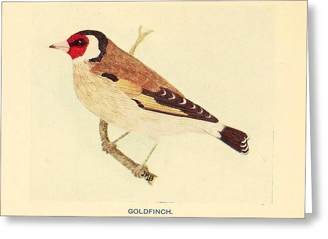 Goldfinch Greeting Card by Philip Ralley