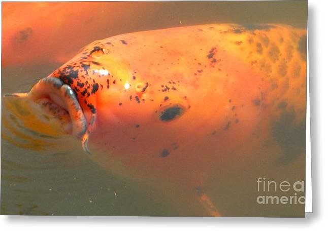 Waterlife Greeting Cards - Goldfish 2 Greeting Card by Nathanael Smith