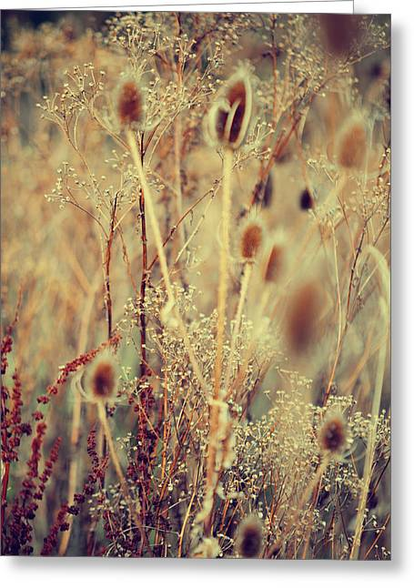 Fall Grass Greeting Cards - Golgen Shades of Wild Grass Greeting Card by Jenny Rainbow
