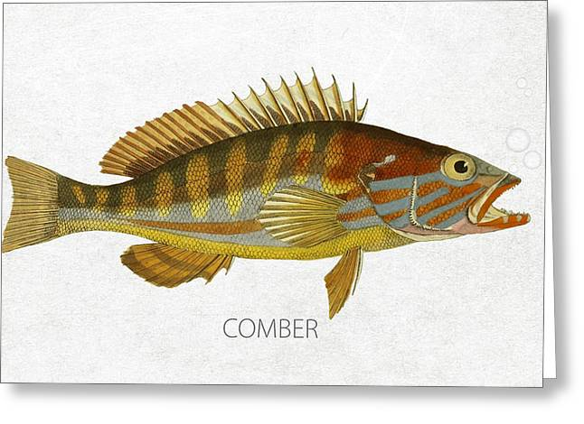 Aquarium Fish Digital Greeting Cards - Comber Greeting Card by Aged Pixel