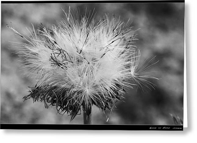 Garden Glass Art Greeting Cards - Gone to Seed Greeting Card by AGeekonaBike Photography