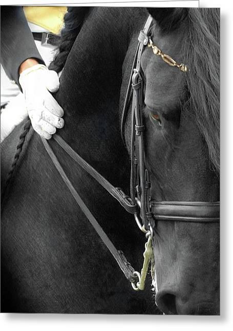 Black Horses Greeting Cards - Good Boy Greeting Card by Fran J Scott