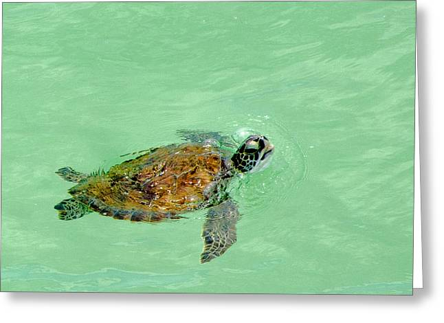 Panama City Beach Greeting Cards - Good Day For A Swim  Greeting Card by Susan  McMenamin