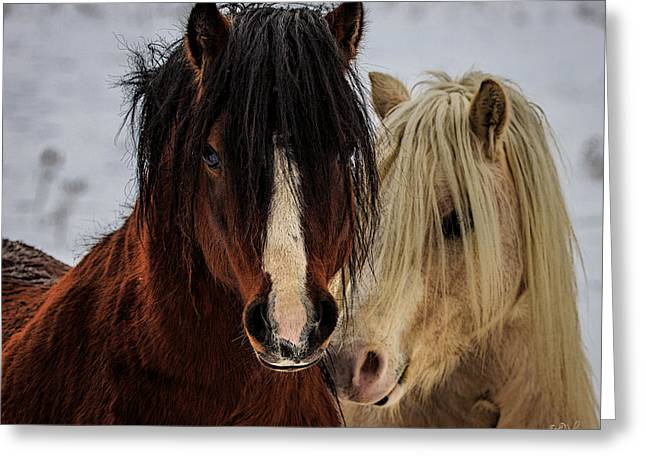 Pony Greeting Cards - Good Friends Greeting Card by Everet Regal