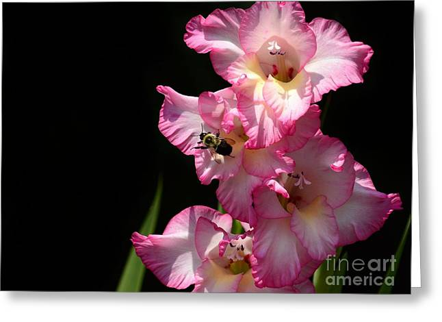 Sunlight On Flowers Greeting Cards - Good Morning Bee Greeting Card by Rhonda Kretzer