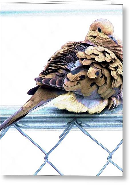 Morning Dove Photograph Greeting Cards - Good Morning Dove Greeting Card by Dave Dresser