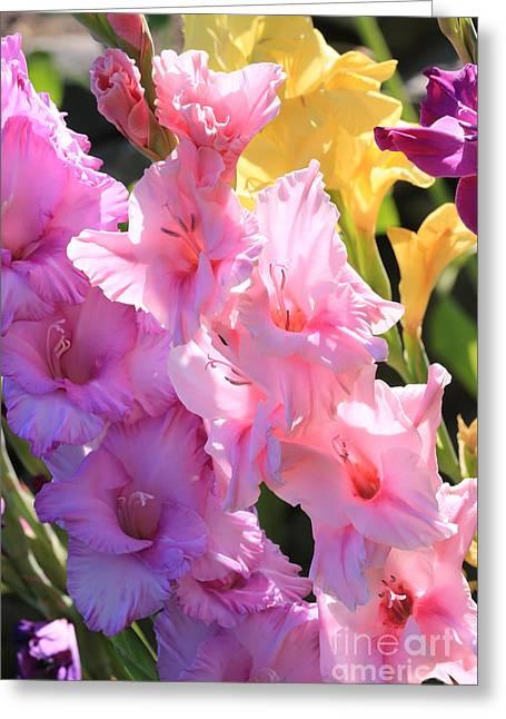 Gladiolas Greeting Cards - Good Morning Gladiolus Greeting Card by Carol Groenen