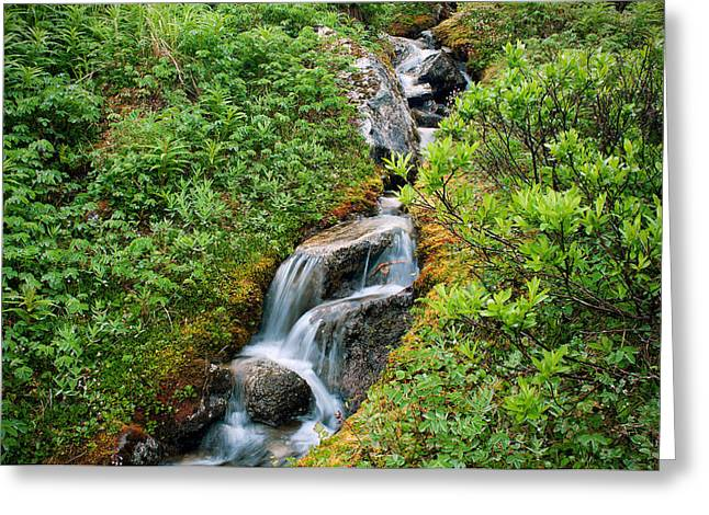 Green Foliage Greeting Cards - Good Mountain Water Greeting Card by Ron Day