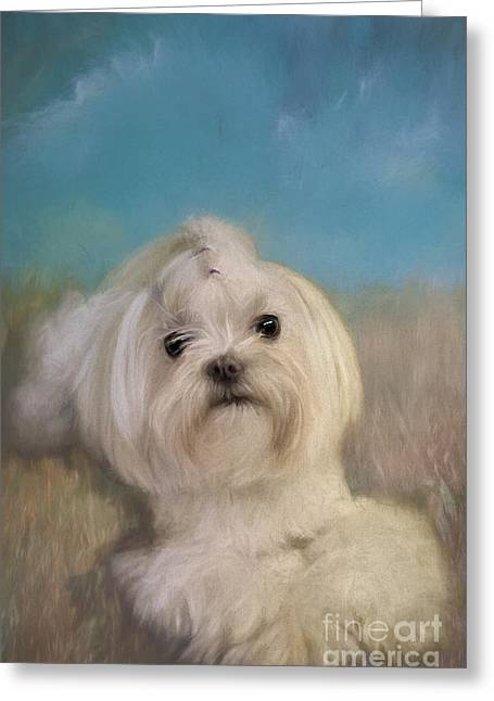 Maltese Dogs Greeting Cards - Good Things Come In Small Packages Greeting Card by Lois Bryan