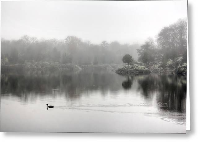 See Fog Greeting Cards - Goose Crossing Foggy Water In Maryland Greeting Card by Francis Sullivan
