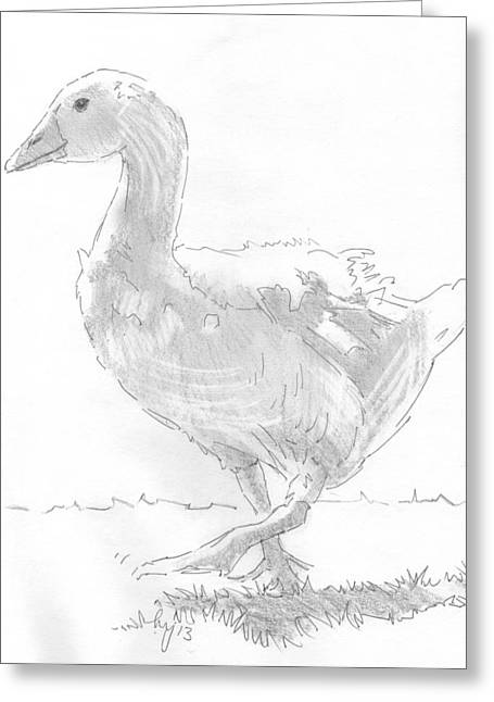 Geese Drawings Greeting Cards - Goose Drawing Greeting Card by Mike Jory