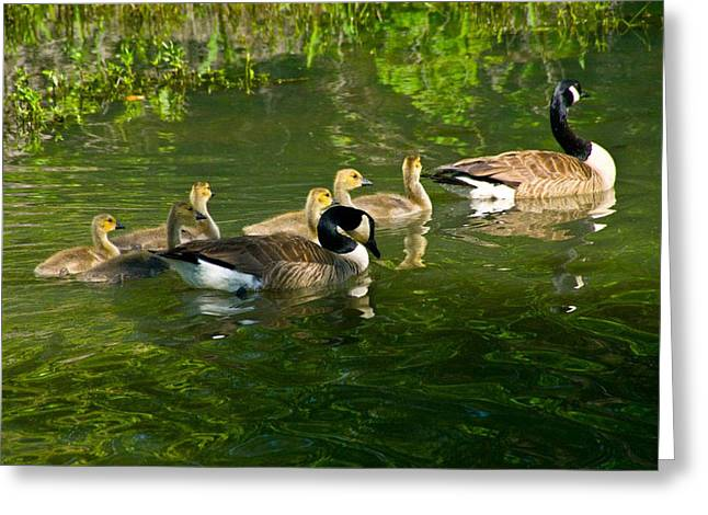 Mother Goose Greeting Cards - Goose Family Greeting Card by Vernis Maxwell