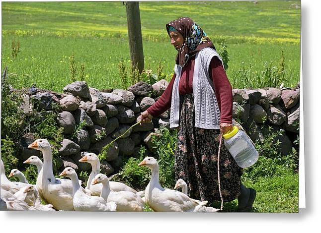 Goose Farming Greeting Card by Bob Gibbons