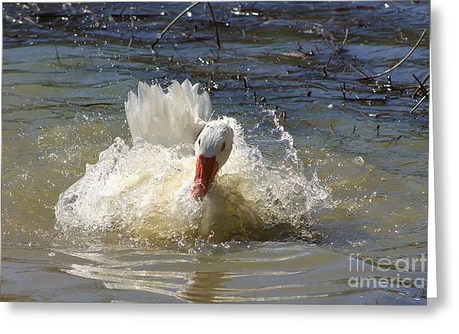 Photogaphy Greeting Cards - Goose Greeting Card by Giovanni Chianese