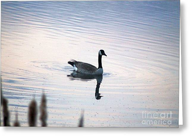 Nature Greeting Cards - Goose in the Early Morning Greeting Card by Mrsroadrunner Photography